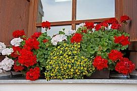 Samozavlažovací truhlíky pro krásný balkon i terasu