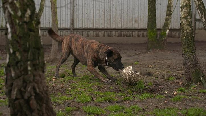 Pes si rád hraje s míčem