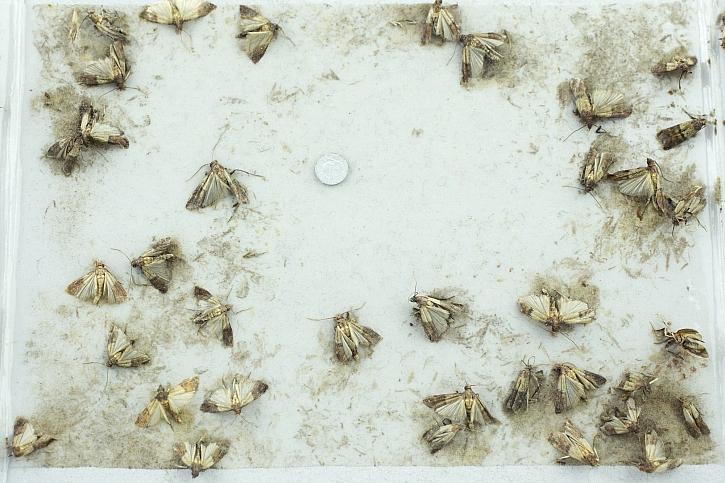 Moli se mohou vyskytnout jak v potravinové skříni, tak v šatně (Zdroj: Depositphotos)