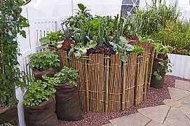 Zkuste doma na terase či balkonu pěstovat brambory v nádobách