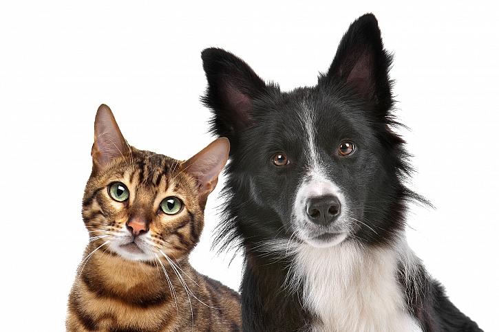 Nekrmte psi ani kočky lidským jídlem, může jim ublížit (Zdroj: Depositphotos)