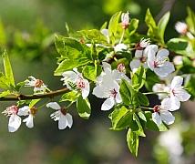 Jarní kouzlo kvetoucích rostlin vám zpříjemní dny