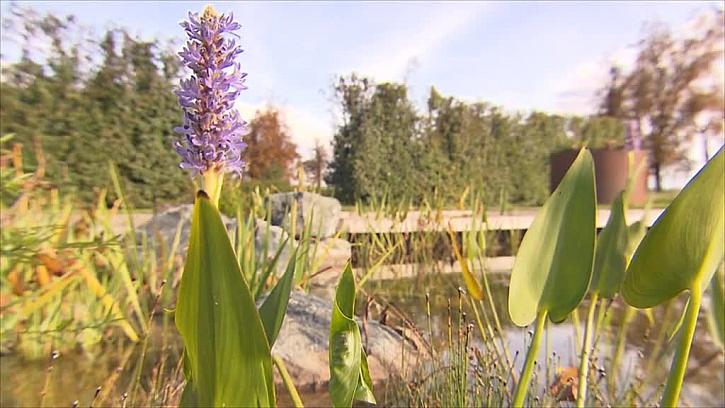Zahrada vodních rostlin