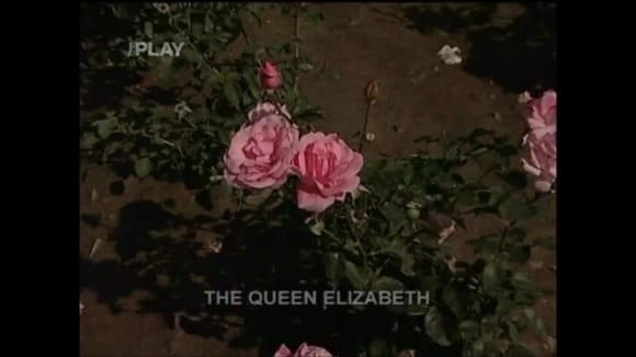 Výběr růží pro podzimní výsadbu