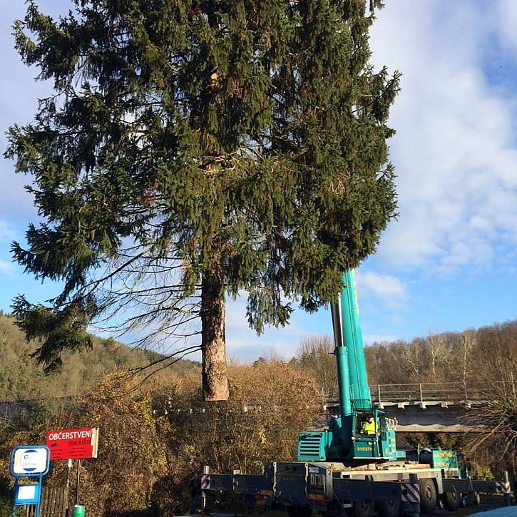 Vánoční strom pro Prahu pokořila zbrusu nová profesionální pila Husqvarna 572 XP