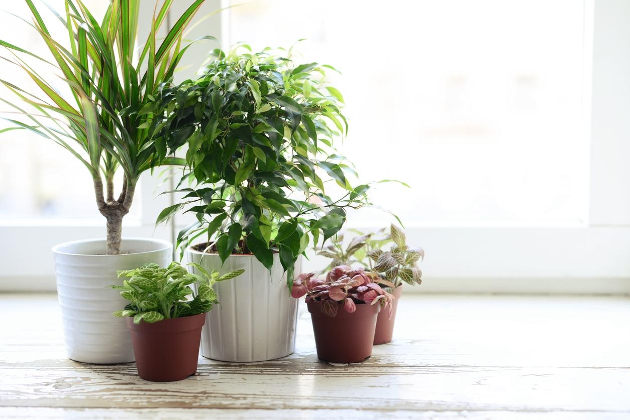Svilušky, třásněnky ačervci: Nebezpeční škůdci pokojových rostlin