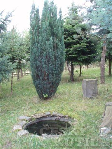 Lesní jezírko