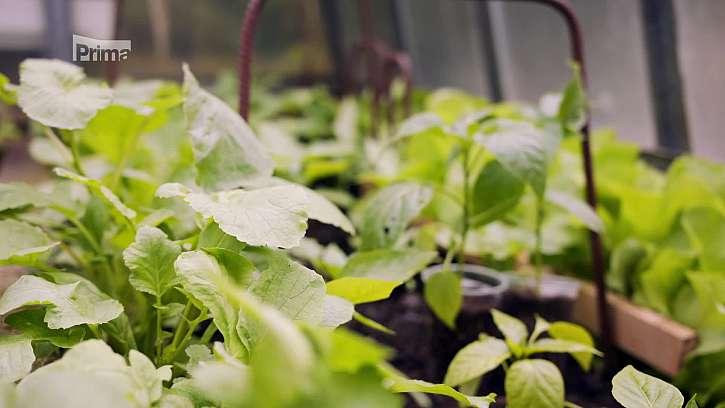 Biologická ochrana ve sklenících
