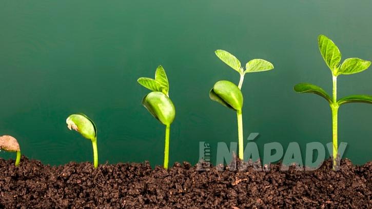 Jak urychlit klíčení semínek: máčená semínka nesmí přes výsevem zaschnout