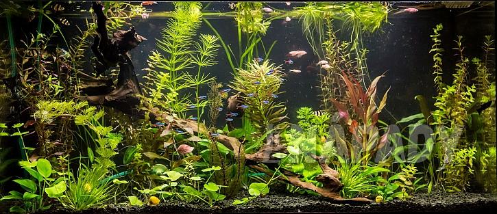 Rostlinami osázené akvárium