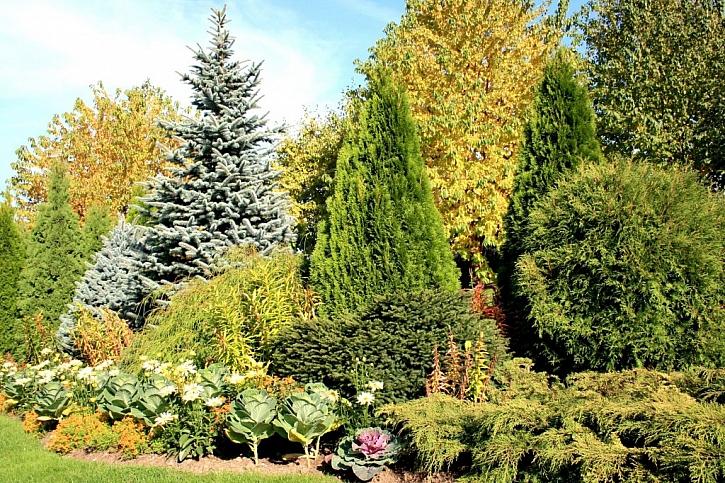 Stromy a keře sázejte s rozmyslem, abyste ze zahrady nevytvořili džungli