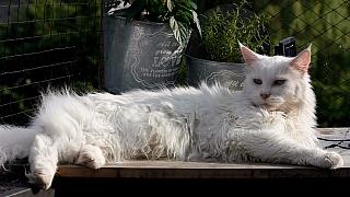 Jak krmit kočku seniorku: Výrazným signálem důchodového věku je ztráta apetitu