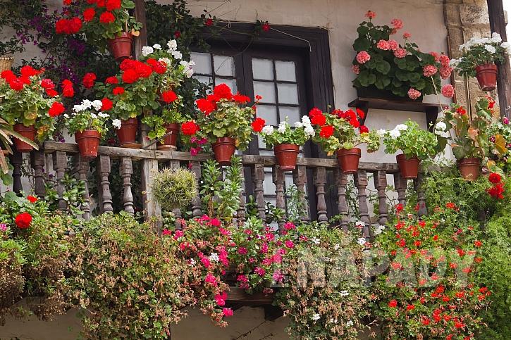 Květiny jako ochrana