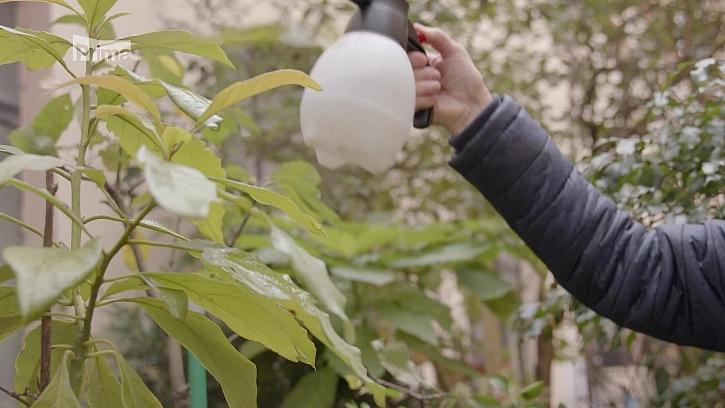 Jak se zbavit škůdců na pokojových rostlinách a vysít kočičí trávu?