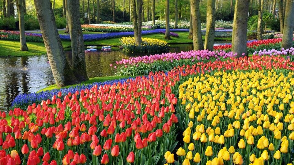 Rozkvetlé cibuloviny v parku Keukenhof: Jarní zahradnický výlet