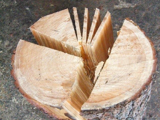 Najít správný strom je kumšt
