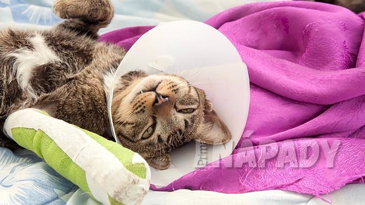 Jak poskytnout první pomoc zraněnému mazlíčkovi  3