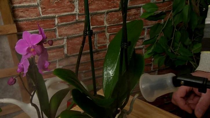 Škůdci orchidejí a jak se jich zbavit