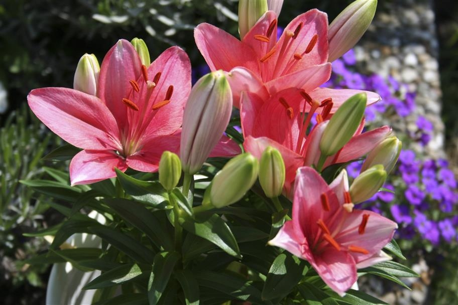 Vydejte se na výlet za vůní rozkvetlých květů: Lilie vPrůhonicích
