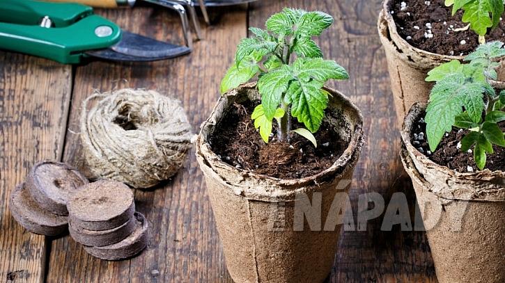 Na předpěstování se hodí rašelinové tablety a květináčky, které jsou ze 100% rozkládajícího se materiálu
