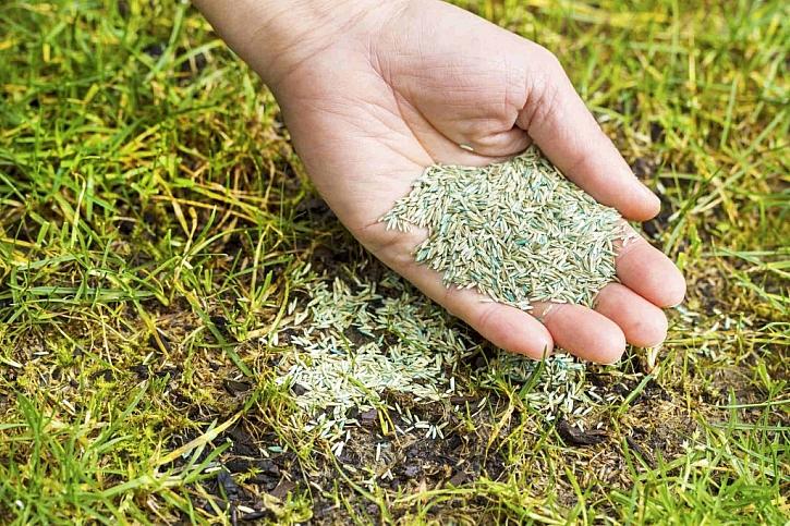 Po prvním sekání zahrady na jaře na místa, kde je tráva řidší či chybí, zasejeme vhodné osivo