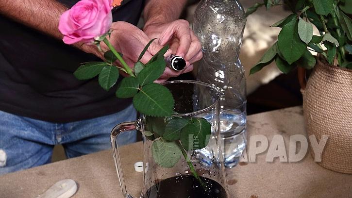Černá růže 3