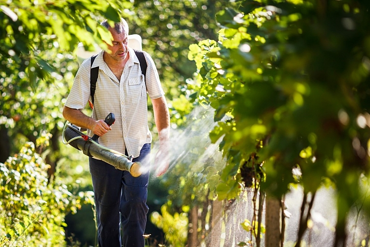 Včasným postřikem zachráníte úrodu před šedou hnilobou