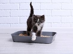 Jaké stelivo bude nejlépe vyhovovat koťatům?