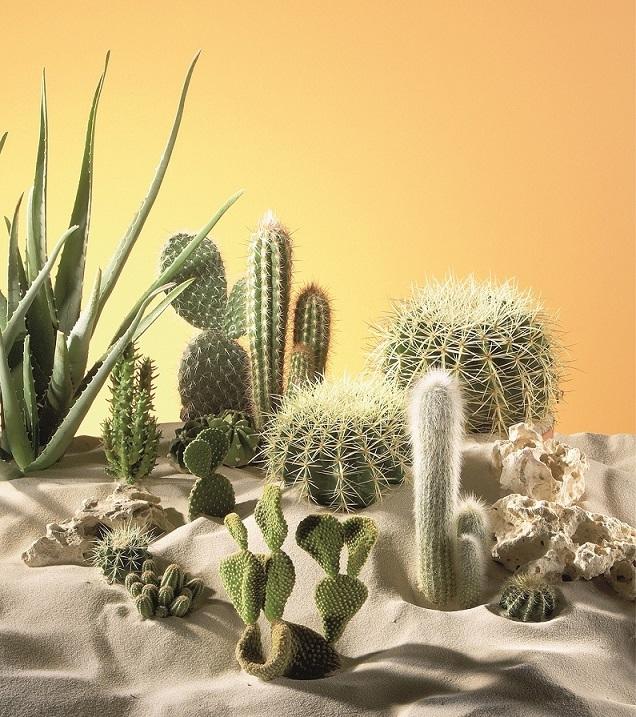 Kaktusy_ilustracni_foto_Hornbach (1)