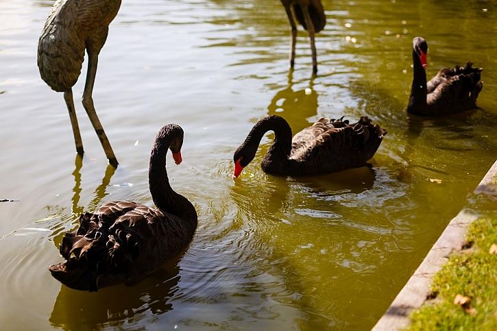 Divocí ptáci