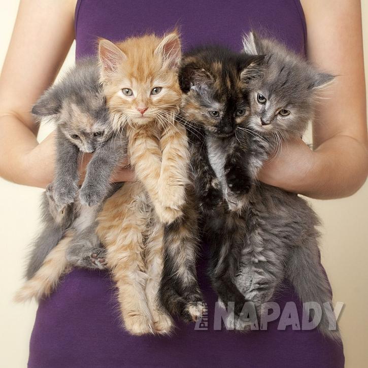 Chcete je? Častý dotaz majitelů nekastrovaných koček (Zdroj: Depositphotos)