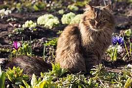 Jak zabránit, aby kočky nevyhrabávaly hlínu ze záhonů nebo květináčů