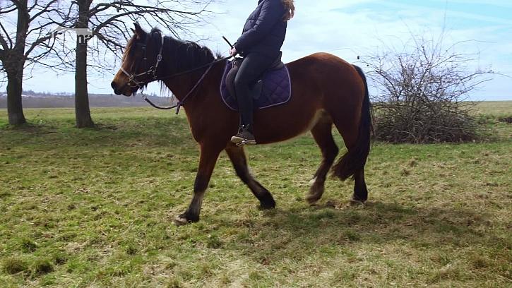 Úprava kopyt koní