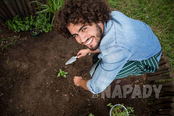 Sázení rostlin