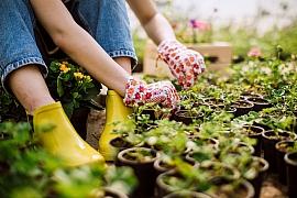 Staňte se úspěšným pěstitelem