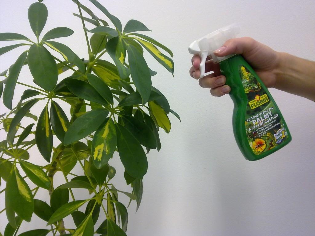 Hnojení pokojových rostlin