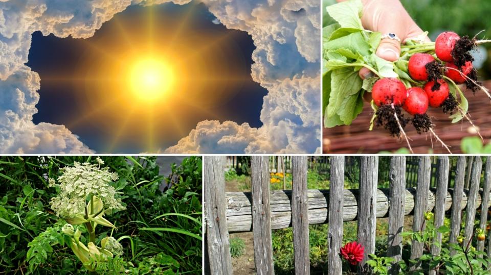 Jaká je předpověď počasí na víkend 15. a 16. září? Tipy, co dělat na zahradě!