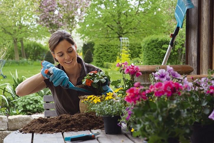 5. Vytvořte si květinové záhony