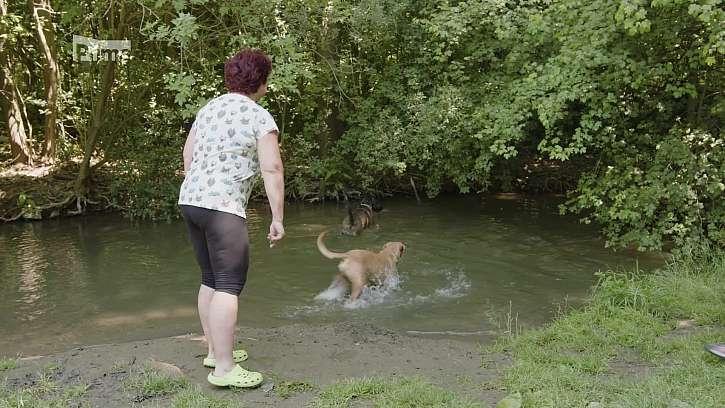 Koupání psa v přírodě