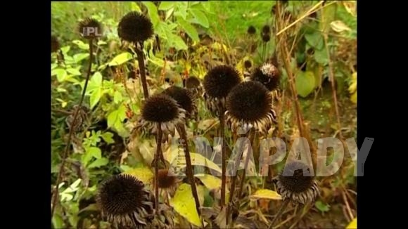 Trvalky podzimních zahrad