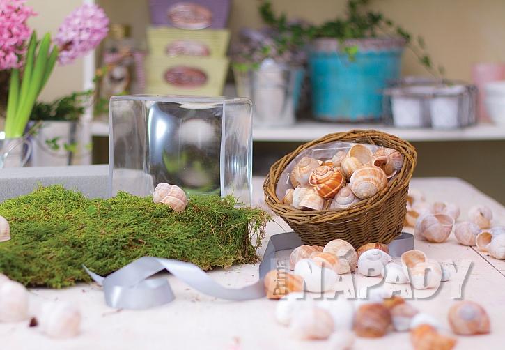 Jak vyrobit romantickou dekoraci ze šnečích ulit 3