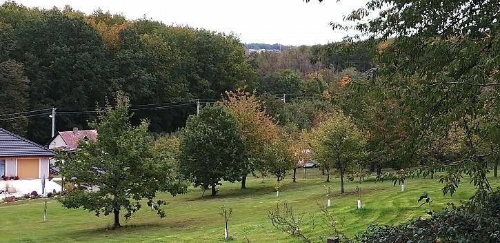 Ochrana stromků před zvěří, okusem a poškozením začíná na naší zahradě (Zdroj: Šárka Miškovská)