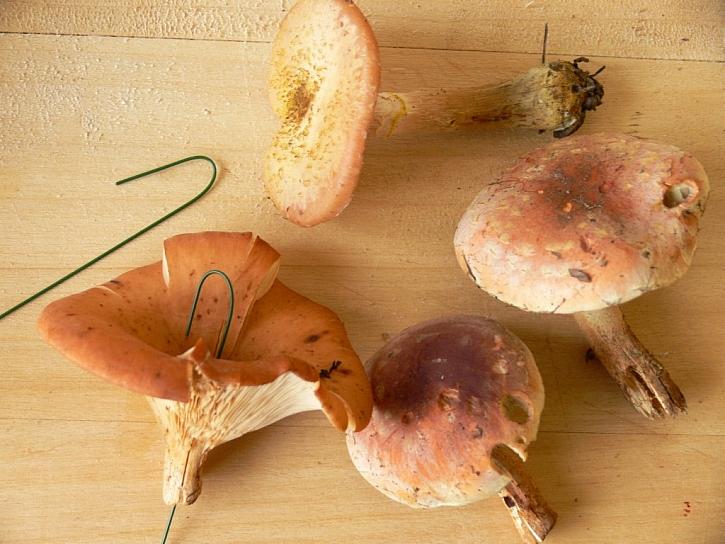 Podzimní srdíčko – výroba přírodní dekorace