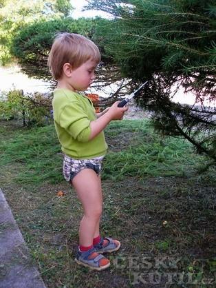Správný řez stromů a keřů