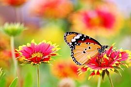 Kalendář pro zahradníky: Červenec