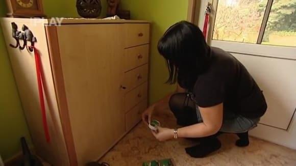 Jak chránit domácnost před škůdci
