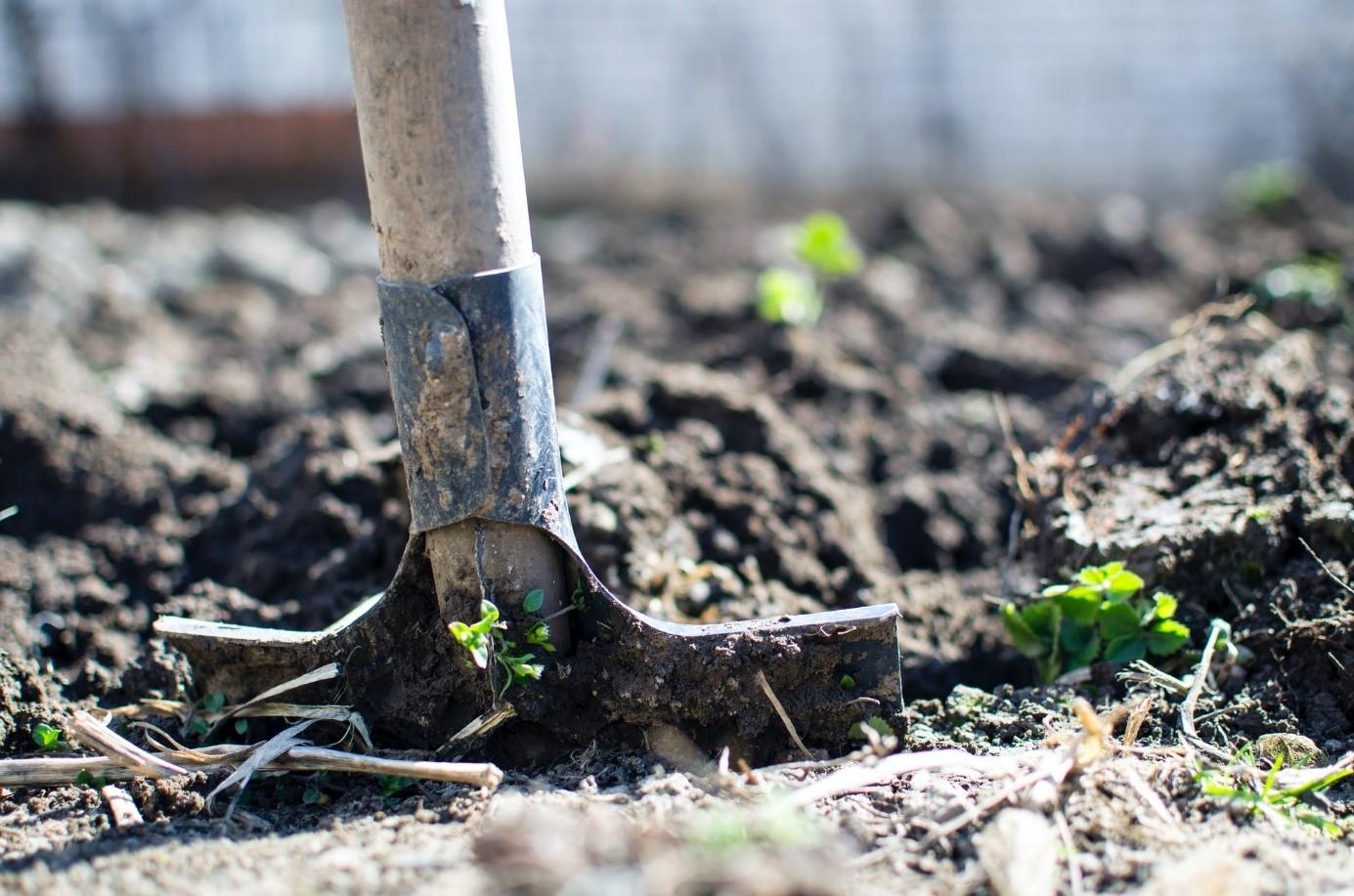 Trápí vás sucho na zahradě? Tyhle tipy vaše záhonky ochrání