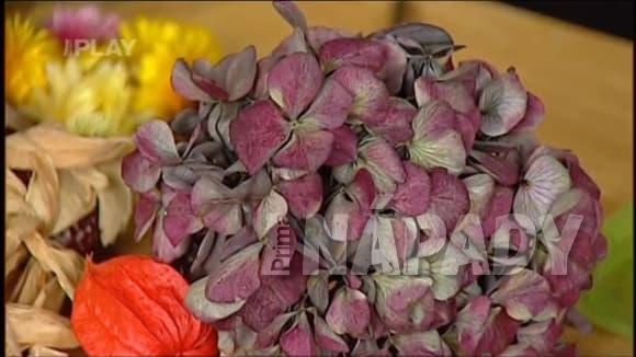 Jak sušit květiny pro suchá aranžmá