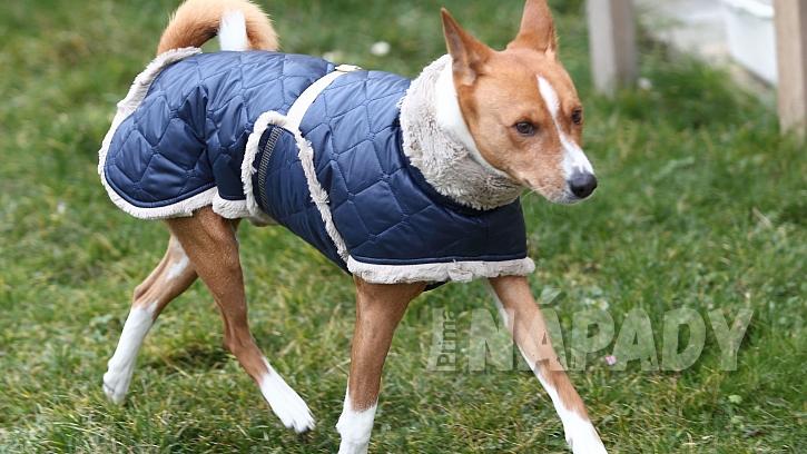 Pes basengi má rád teplo a oblečkem nepohrdne