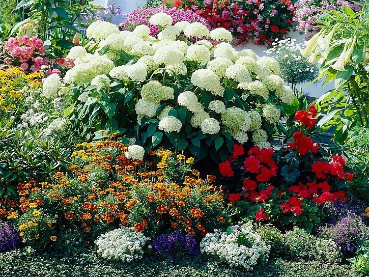 Pod vyšší keře lze vysázet nízké květiny